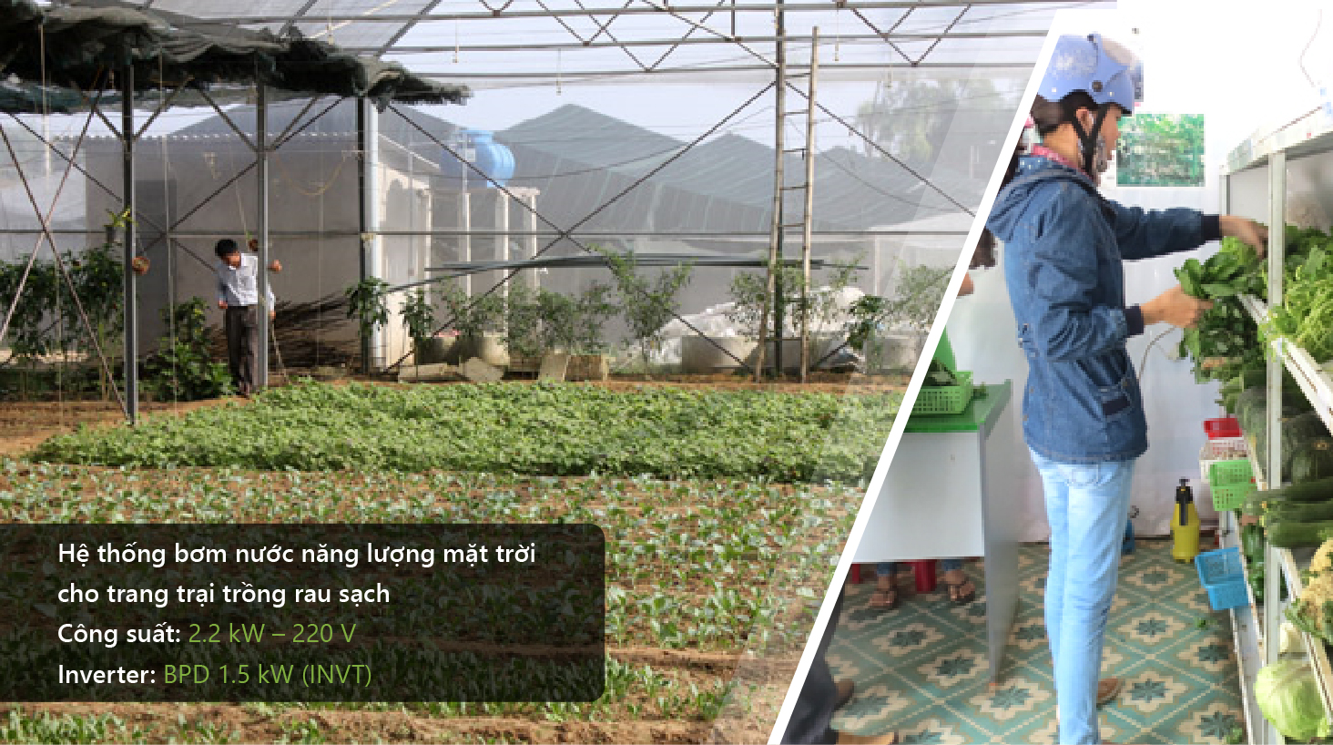 Ứng dụng điện năng lượng mặt trời vào nông nghiệp sạch